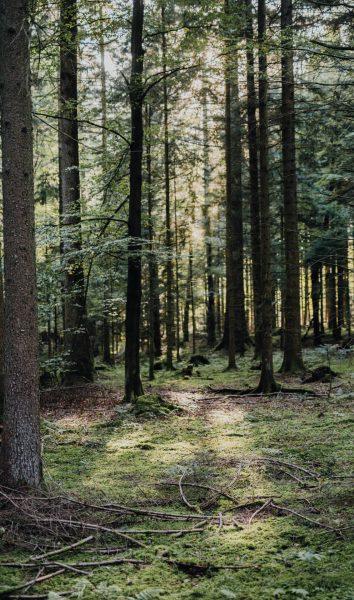 Bloody-Roots-Schwarzwald (200 von 1)